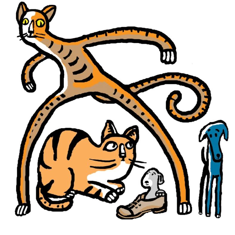 gato04