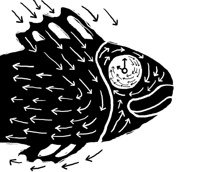 peces04a